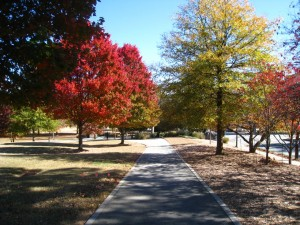 Atlanta Relocation Guide What is the Weather